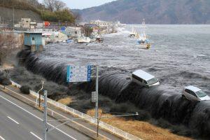 fig tsunami