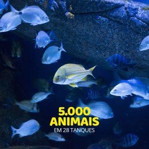 VemProAquaRio_AquaRio_5.000_animais2